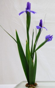 500x800-Ikebana-Iris